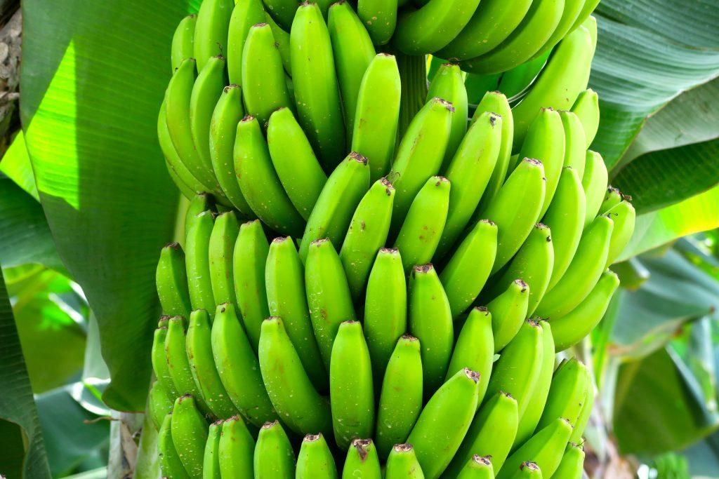 bananenwein kaufen