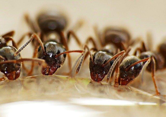Wirksames Mittel gegen Ameisen