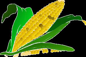 couscous vegan