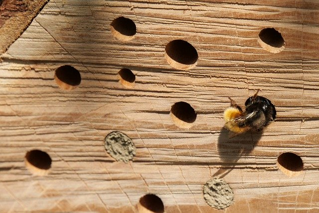 nistplatz für wildbienen