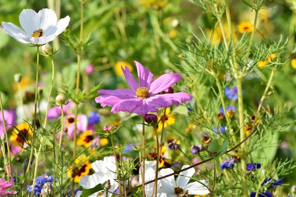 wildblumen für wildbienenhotels