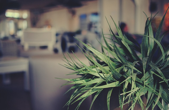 Pflanztrog und Pflanzenkübel